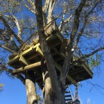 Johnny's Treehouse9